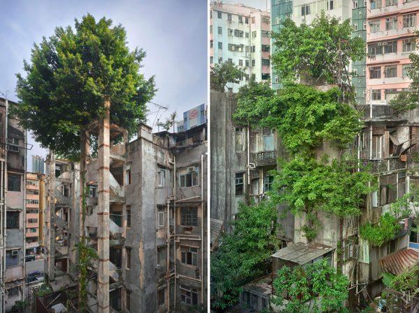 árvores-edifício-abandonados-hong-kong