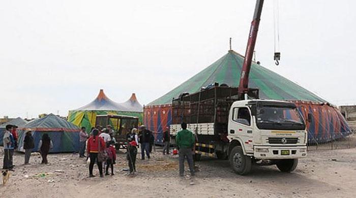 33-circus-lions-rescue-airlift-adi-africa-5