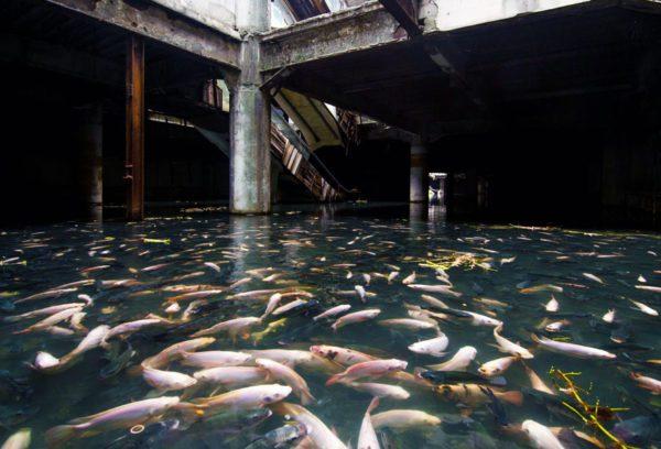 centro-comercial-abandonado-lago-peixes