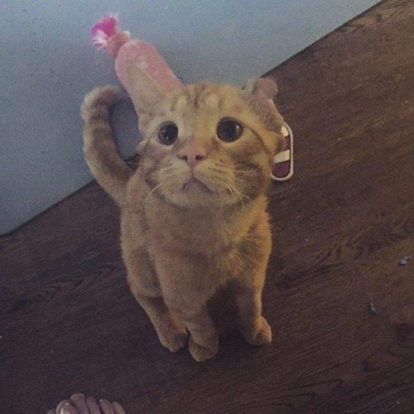 gato-triste-4