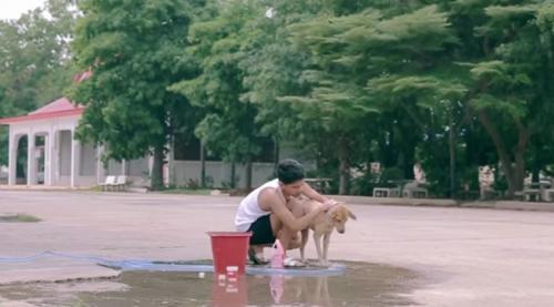 gluta-tutor-video-banhos-cachorros-500x277