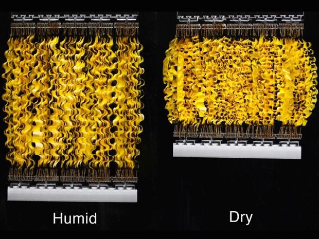 """""""HYDRAs"""" são músculos artificiais que se extendem e contraem em resposta a mudanças na umidade  (Foto: Xi Chen/Divulgação)"""