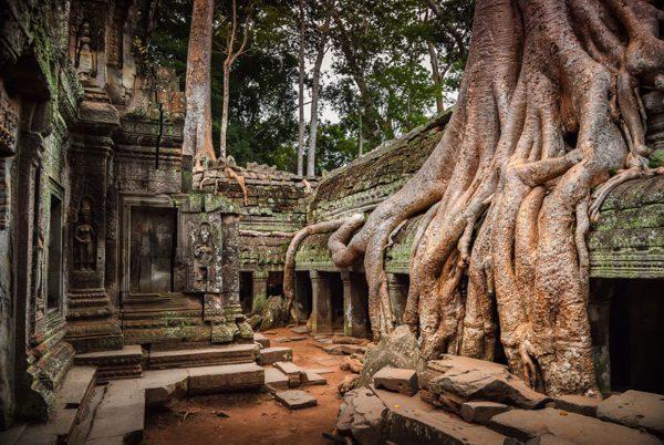 templo-árvores-cambodja