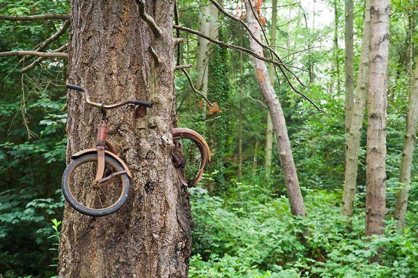 árvore-bicicleta-árvore