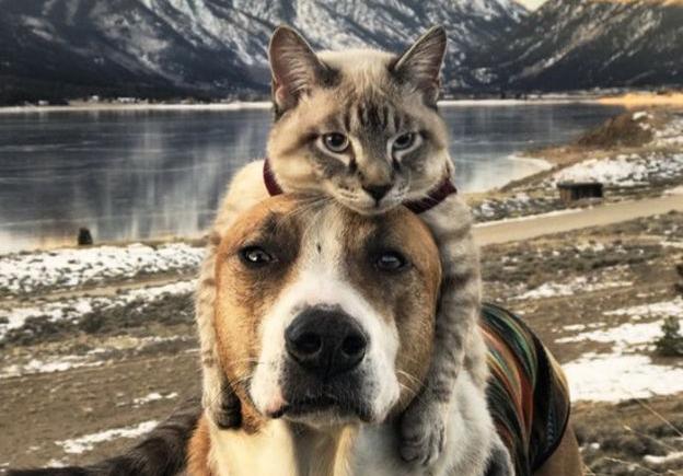 Gato E Cachorro Viram Melhores Amigos E Fazem Viagens