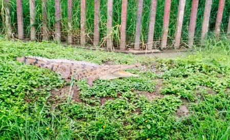 aldeia4-ecod.jpg