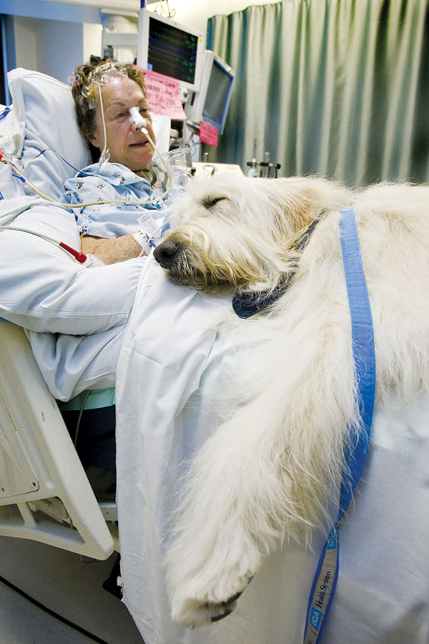 hospital-pets-allowed-animal-therapy-zacharys-paws-for-healing-juravinski-12